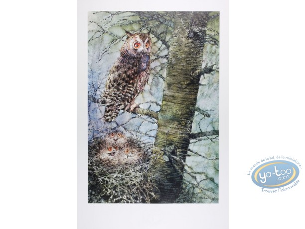 Offset Print, The long eared owl