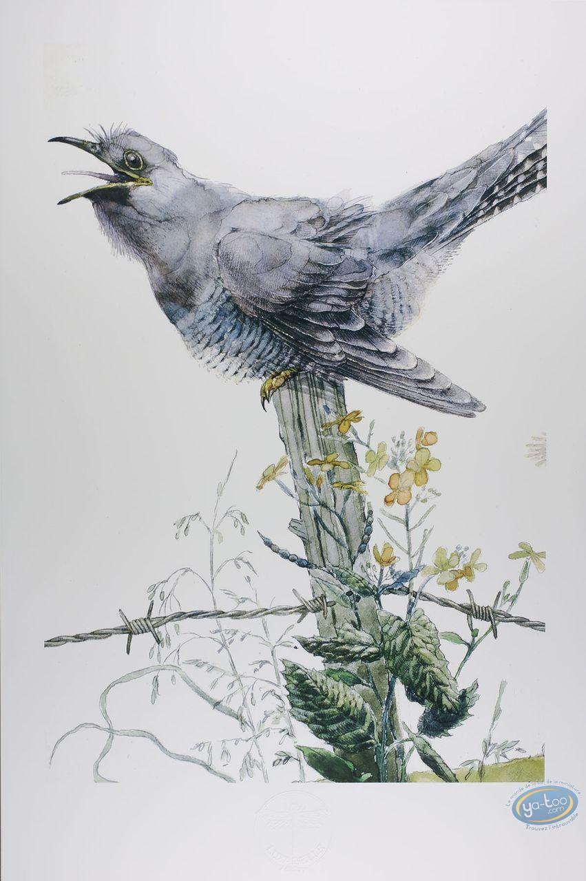 Offset Print, The cuckoo