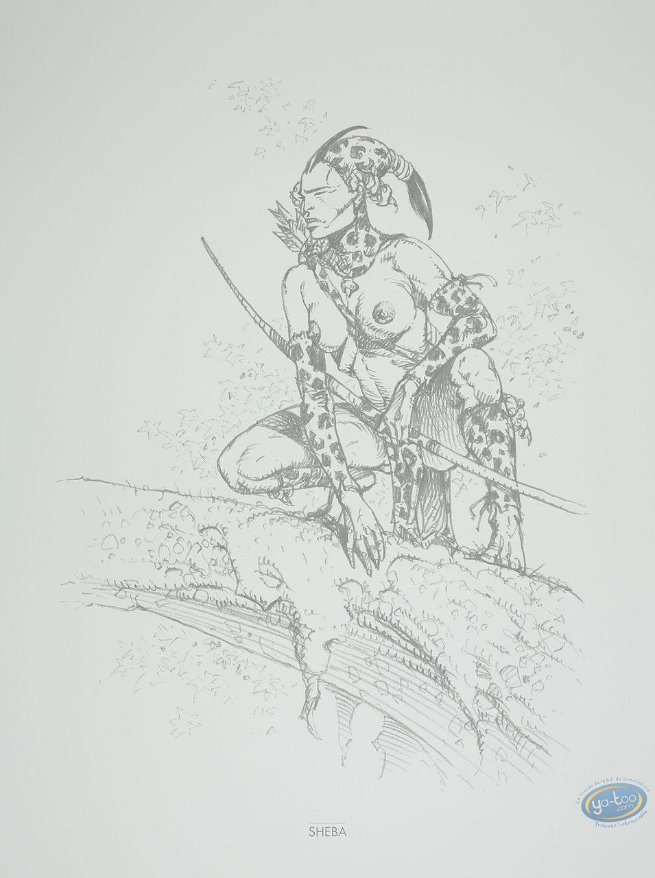 Offset Print, Amazones : Sheba