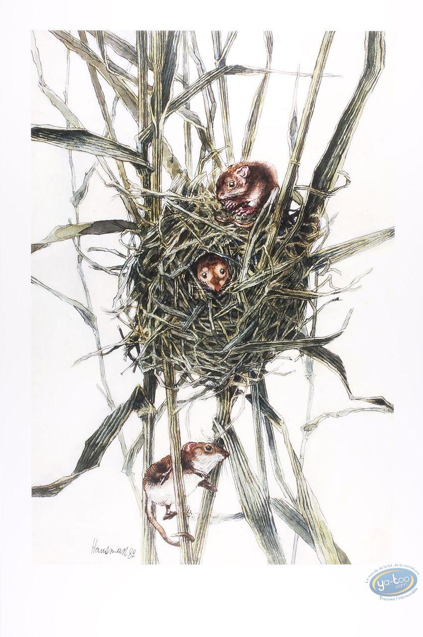 Affiche Offset, Muscardin - Rat des moissons