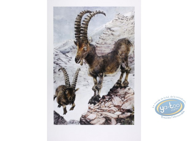 Offset Print, The ibexes