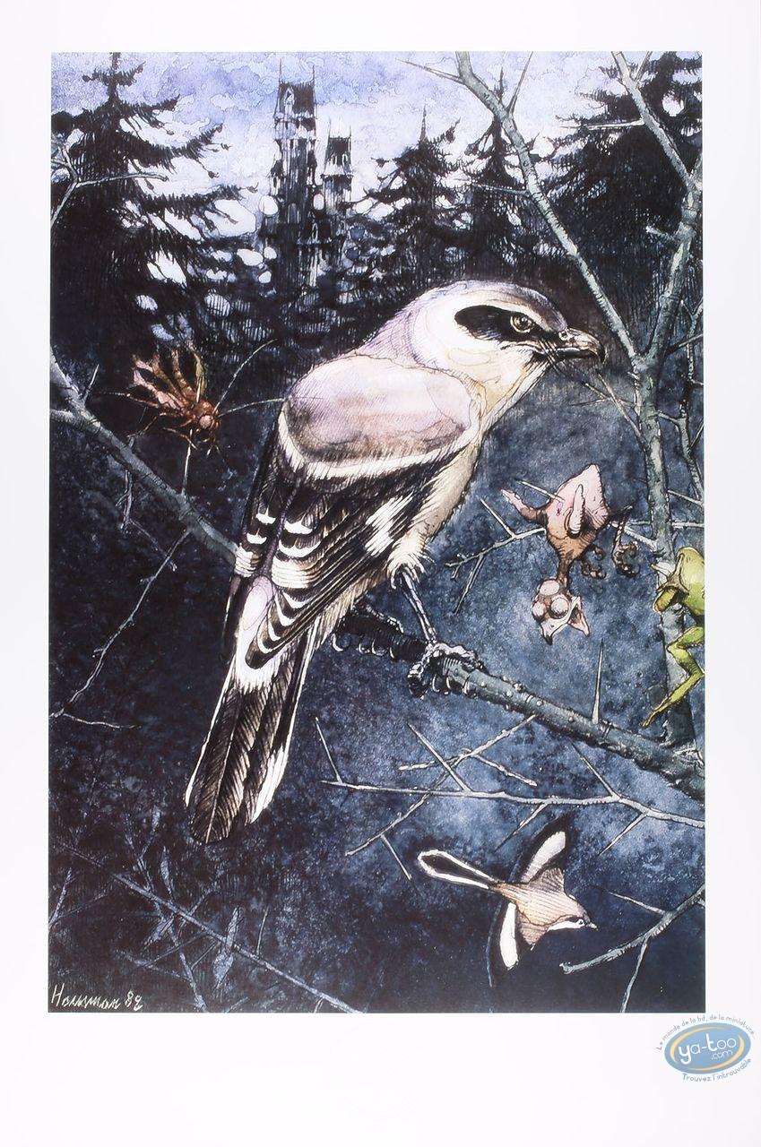 Offset Print, The shrike