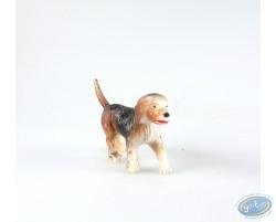 Dog beagle